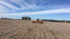 ¿Qué hacer frente a semillas de maíz que no cumplen con los estándares mínimos de calidad?