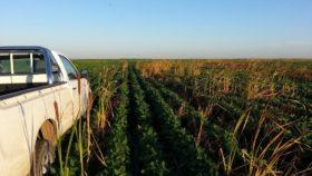 Perjudicar la capacidad de compra del agro golpea a la industria: la venta de camionetas sigue en terapia intensiva