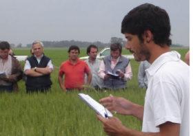 """Más allá del Margen Bruto: desarrollan el primer """"tablero de riesgo agrícola"""" para estimar probabilidad y magnitud de resultados económicos por cultivo"""