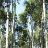 La política de promoción forestal fue un éxito en Chile, Uruguay y Brasil: pero fracasó en la Argentina