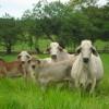 Brasil sigue liderando las ventas de carne bovina en el mercado chileno: pero Paraguay está a un paso de recuperar el primer puesto