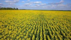 """Un empresario agrícola del oeste bonaerense es el nuevo presidente de Asagir: """"Si los compradores dan una buena señal los productores van a volver a apostar al cultivo"""""""