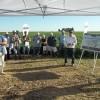 Por cuarto año consecutivo las sojas Intacta de grupos cortos y medios rindieron menos que las variedades RR1 en la zona pampeana