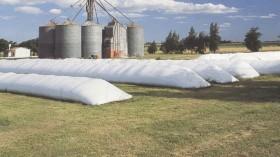 El mercado granario argentino cuenta con mecanismos para evitar sorpresas desagradables: pero es necesario usarlos siempre
