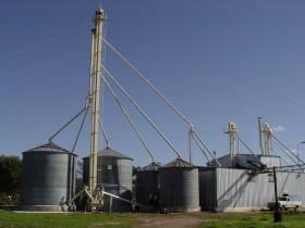 Análisis gratuitos de trigo para productores del sudeste bonaerense: buscan determinar la cantidad del cereal que no tiene compradores en el mercado local