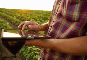Los arrendamientos agrícolas quedaron segmentados en tres mercados bien diferenciados: ajuste parcial, fragmentación creativa y pauperización