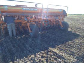 Elección de cultivares de trigo en la zona pampeana: ¿rendimiento o calidad?
